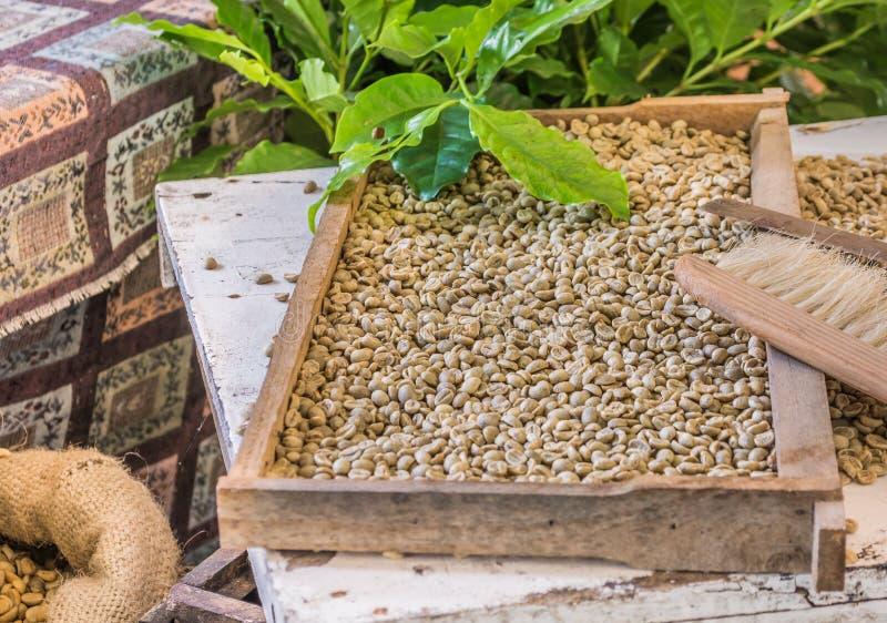 Vorwählen von Kaffeebohnen lizenzfreies stockbild