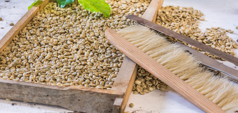 Vorwählen von Kaffeebohnen lizenzfreie stockbilder