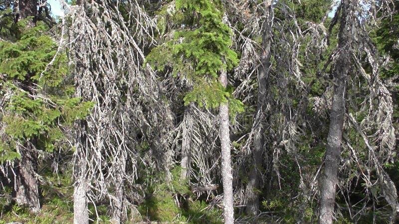 Vottovaara Karelia imagen de archivo libre de regalías