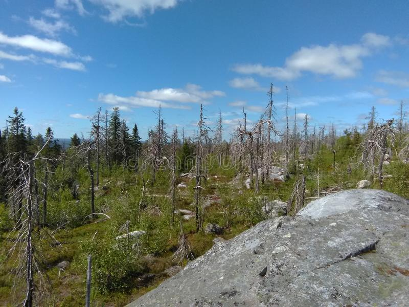 Vottovaara Karelia. Abnormal mountain in Karelia, ugly trees, mystical landscapes. There are more than one and a half thousand stone sades. The sinister secret royalty free stock photo