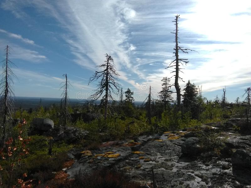 Vottovaara Karelia. Abnormal mountain in Karelia, ugly trees, mystical landscapes. There are more than one and a half thousand stone sades. The sinister secret stock images