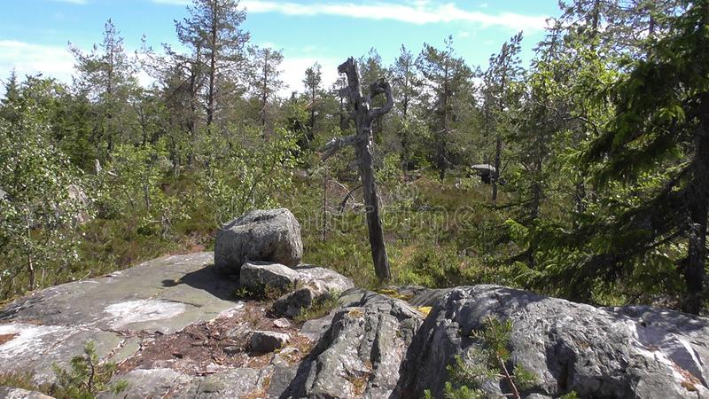 Vottovaara Karelia - ancient pagan symbol at the stairs. Abnormal mountain in Karelia, ugly trees, mystical landscapes. There are more than one and a half royalty free stock photos