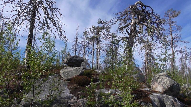 Vottovaara Karelia - fula träd- & stensades royaltyfri foto