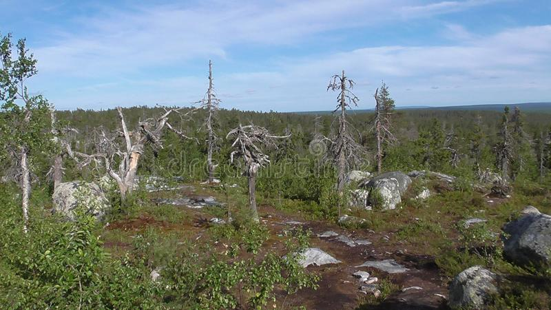 Vottovaara Karelia - the realm of the dead trees and stones. Abnormal mountain in Karelia, ugly trees, mystical landscapes. There are more than one and a half stock image