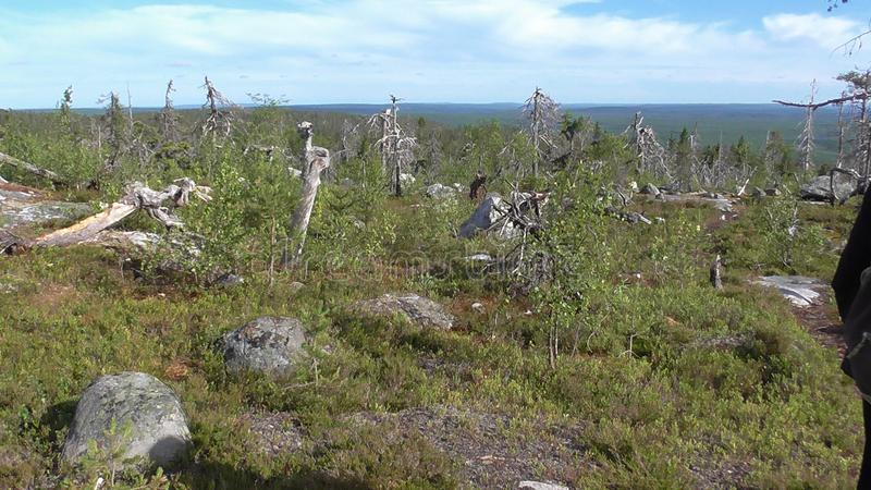 Vottovaara Karelia - the realm of the dead trees and stones. Abnormal mountain in Karelia, ugly trees, mystical landscapes. There are more than one and a half royalty free stock photos