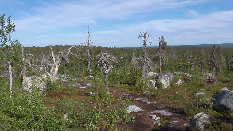 Vottovaara Karelia - sfären av de döda träden och stenarna fotografering för bildbyråer