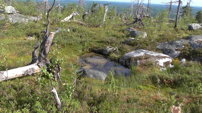 Vottovaara Karelia - small lake on the mountain. Abnormal mountain in Karelia, ugly trees, mystical landscapes. There are more than one and a half thousand stone stock photo