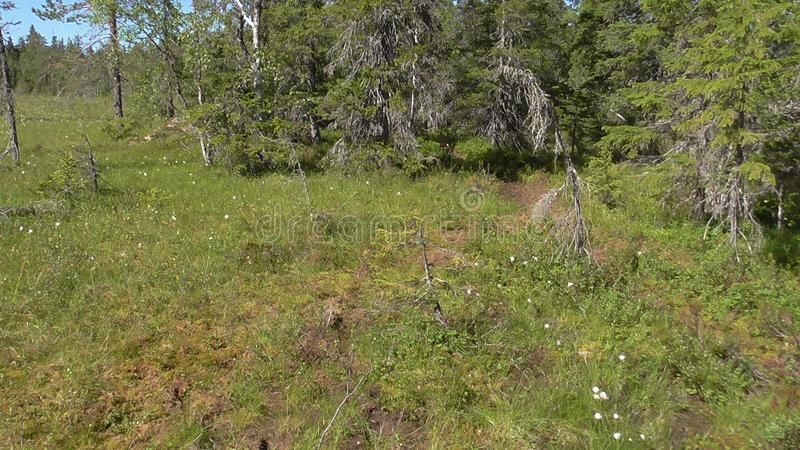 Vottovaara Karelia - swamp on the mountain. Abnormal mountain in Karelia, ugly trees, mystical landscapes. There are more than one and a half thousand stone stock images