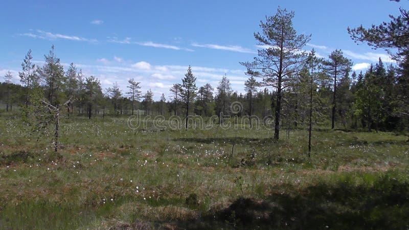 Vottovaara Karelia - träsk royaltyfria foton