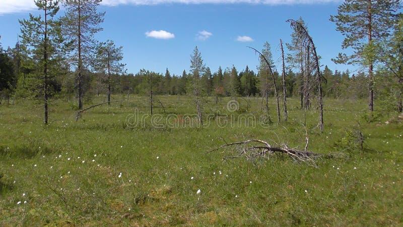Vottovaara Karelia - träsk på berget arkivfoton