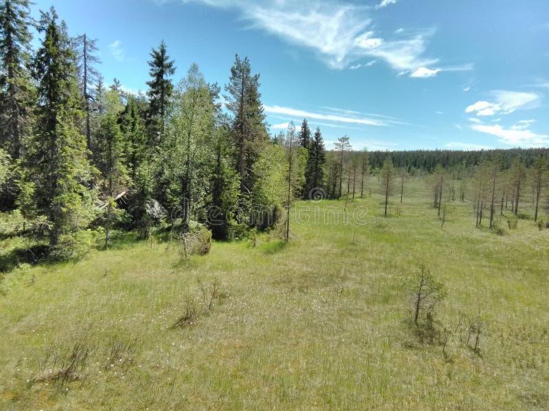 Vottovaara Karelia - träsket arkivfoto