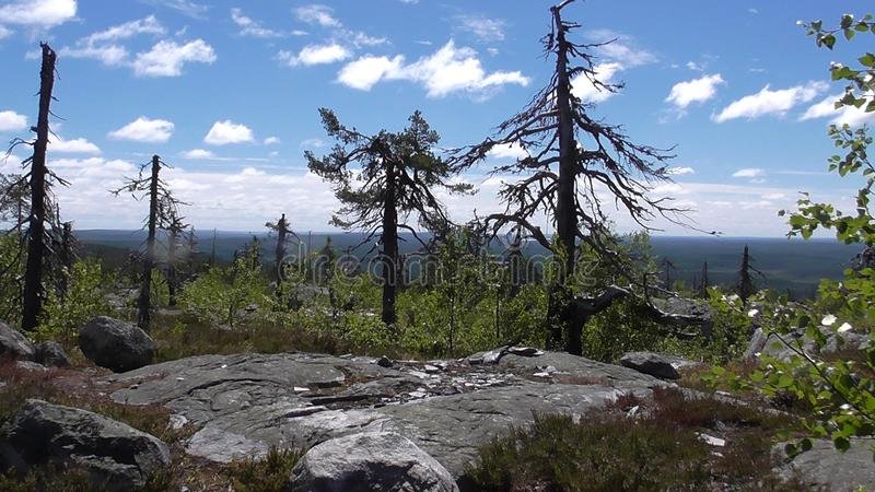 Vottovaara Karelia - ugly trees. Abnormal mountain in Karelia, ugly trees, mystical landscapes. There are more than one and a half thousand stone sades. The royalty free stock images