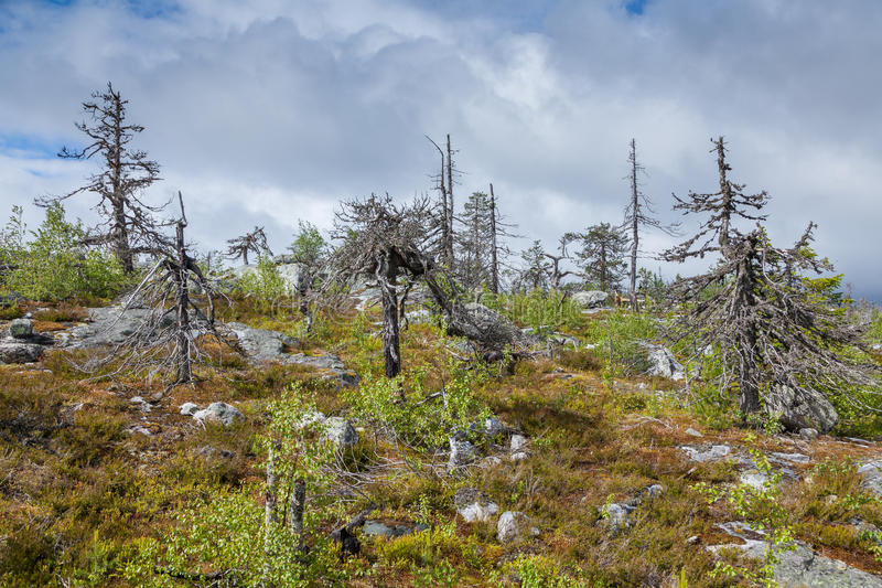 Vottovaara. Natural landscape Mountain Vottovaara after long-time forest fire. Karelia, Russia stock photography