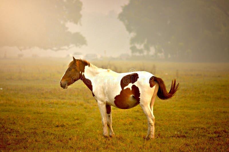 Vous pouvez prendre un cheval hors du sauvage, mais vous pouvez le ` t prendre le sauvage hors du cheval ! photographie stock libre de droits