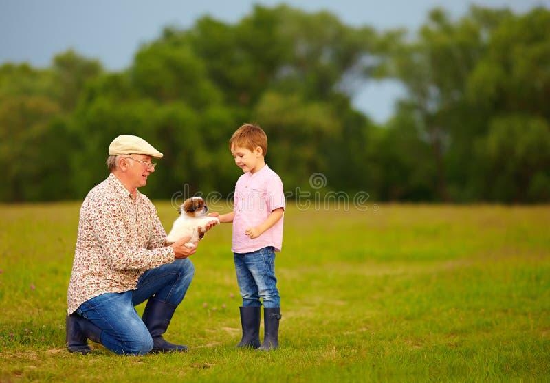 Vovô que apresenta o cachorrinho pequeno ao neto entusiasmado fotos de stock