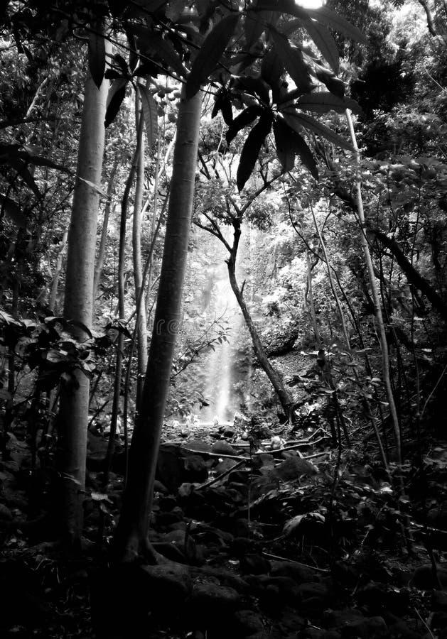 Voyage à une cascade photographie stock libre de droits