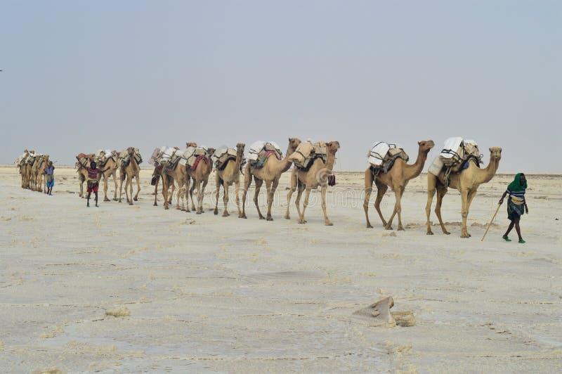 Voyage africain, à travers le lac de sel photo stock