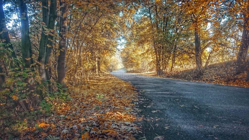 Voyage d'automne image stock