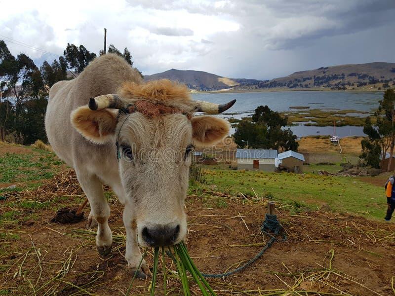 Voyage de Bolivie photos stock