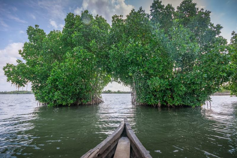 Voyage de cano? par la for?t de pal?tuvier en ?le de Munroe images stock