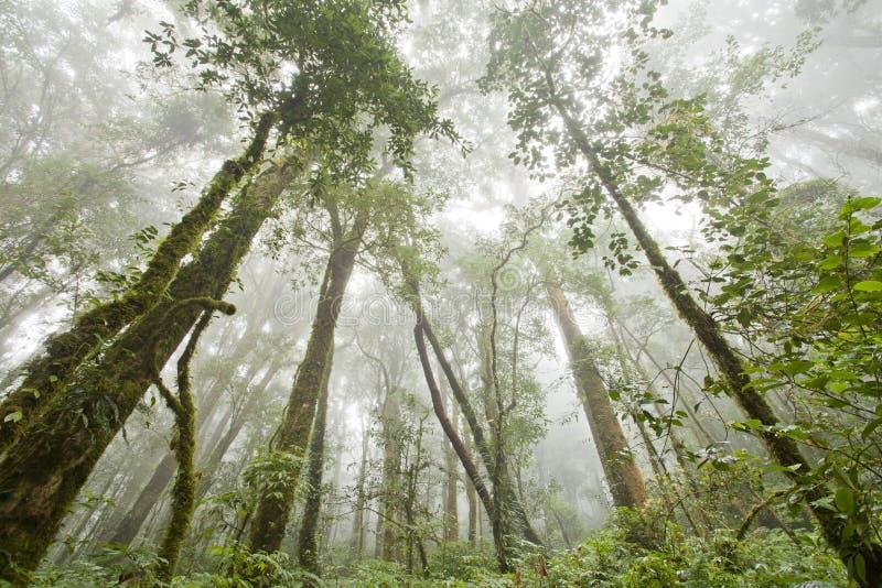 Voyage de forêt tropicale images stock