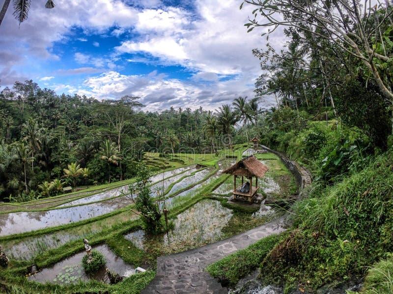 Voyage de nature de paysage images libres de droits