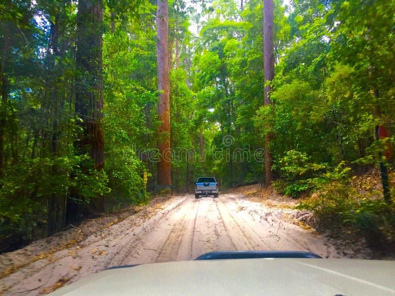 Voyage par la route de safari photo libre de droits