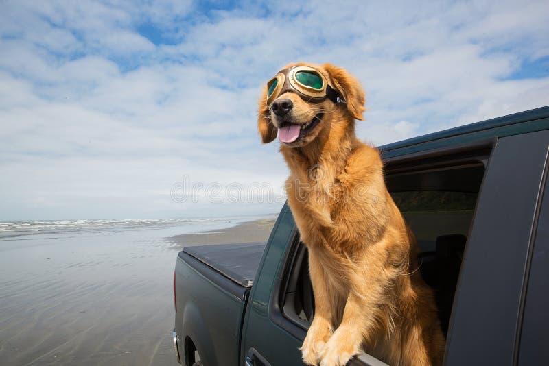 Voyage par la route pour un chien images libres de droits