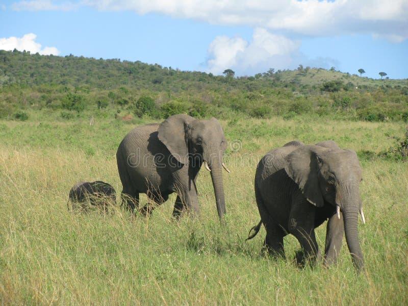 Voyage vers le Kenya photographie stock libre de droits