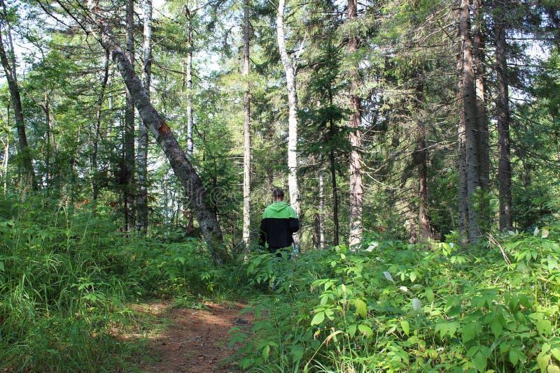 Voyageur de touristes dans la forêt sur la route photographie stock