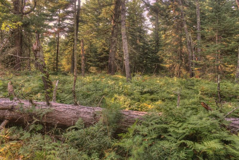 Voyageurs park narodowy w Północnym Minnestoa podczas lata zdjęcia stock
