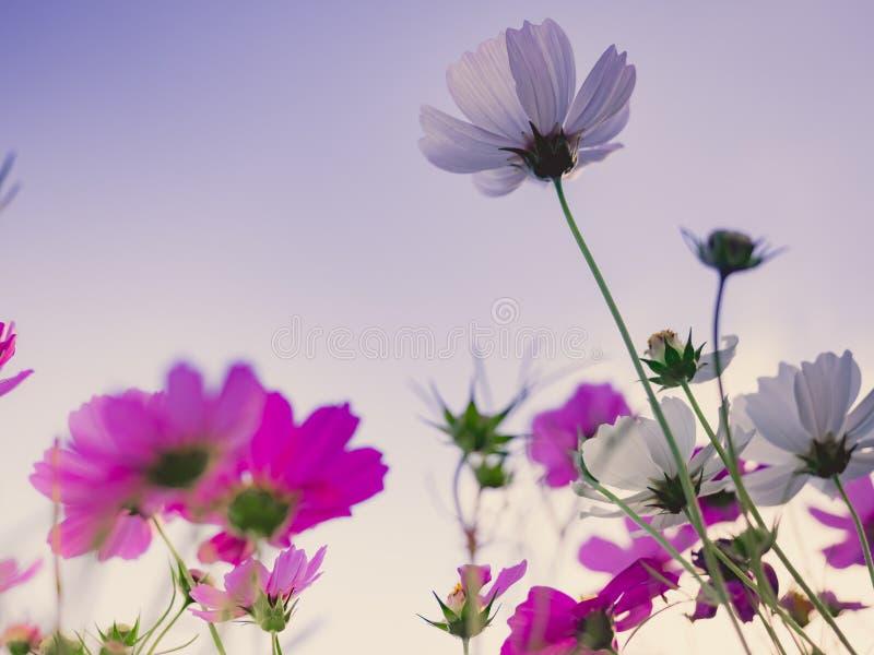 Voyagez et risquez le concept de la fin vers le haut du beau gisement de fleur photos libres de droits