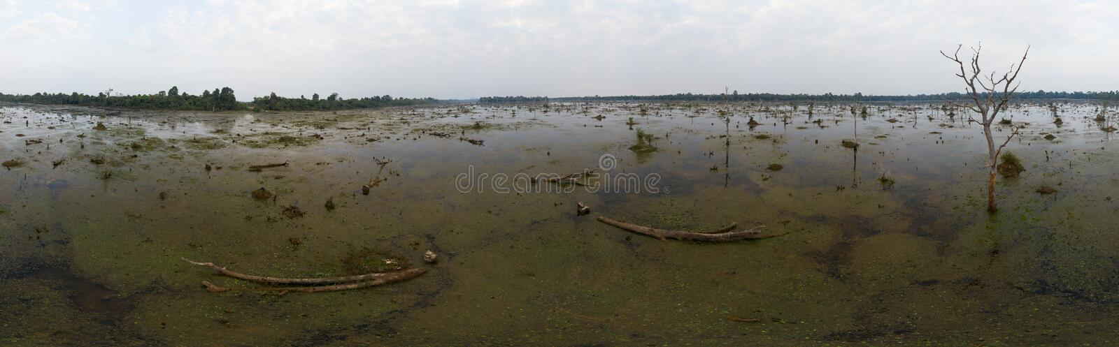 Lake with old trees sticking out of the water. 360 VR panorama drone shot. Cambodia near ancient Angkor Wat Temple Ruin royalty free stock photography
