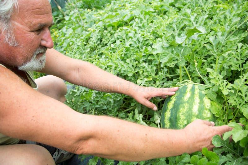 Vrai agriculteur dans son propre jardin images libres de droits