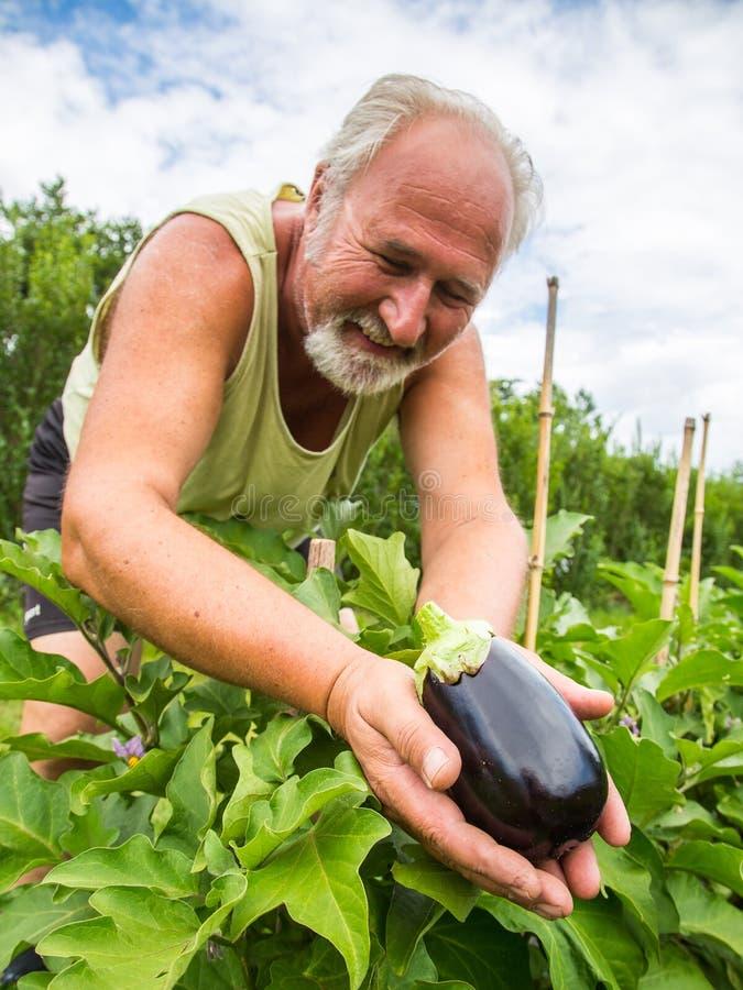 Vrai agriculteur dans son propre jardin photos stock