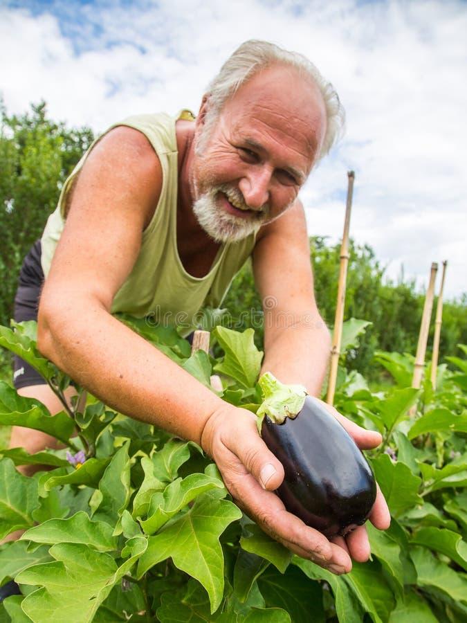 Vrai agriculteur dans son propre jardin image libre de droits