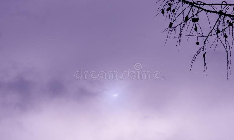 Vrai ciel violet de photo d'éclipse solaire avec la branche images stock