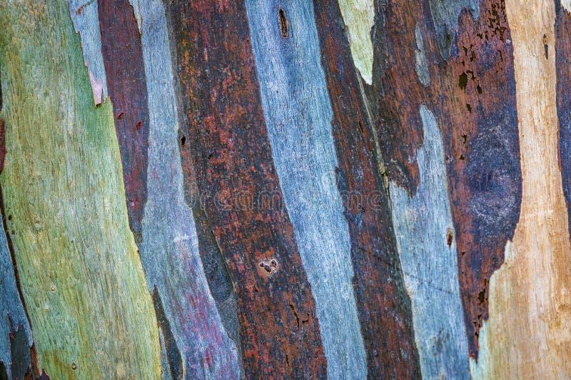 Vraie peau de coloration d'arbre photo libre de droits