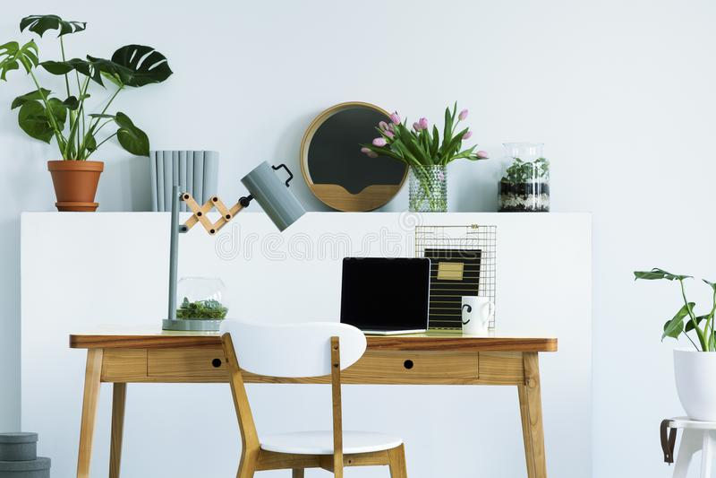 Vraie photo d'étagère de mur avec les fleurs, la plante fraîche, le décor et la BO photographie stock libre de droits