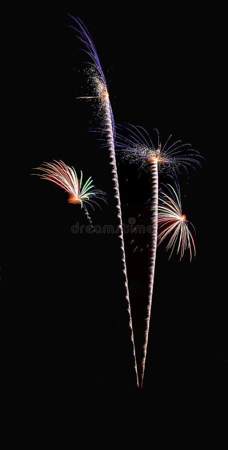 Vraies feux d'artifice, fleurs ou modèle d'arbres de noix de coco image stock
