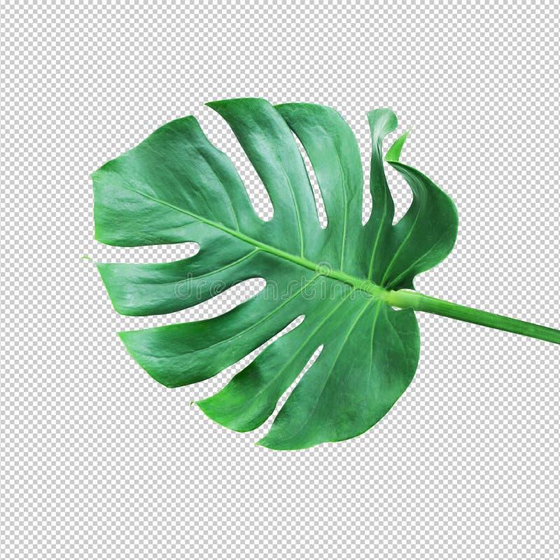 Vraies idées de concepts de leafnature de monstera photos stock