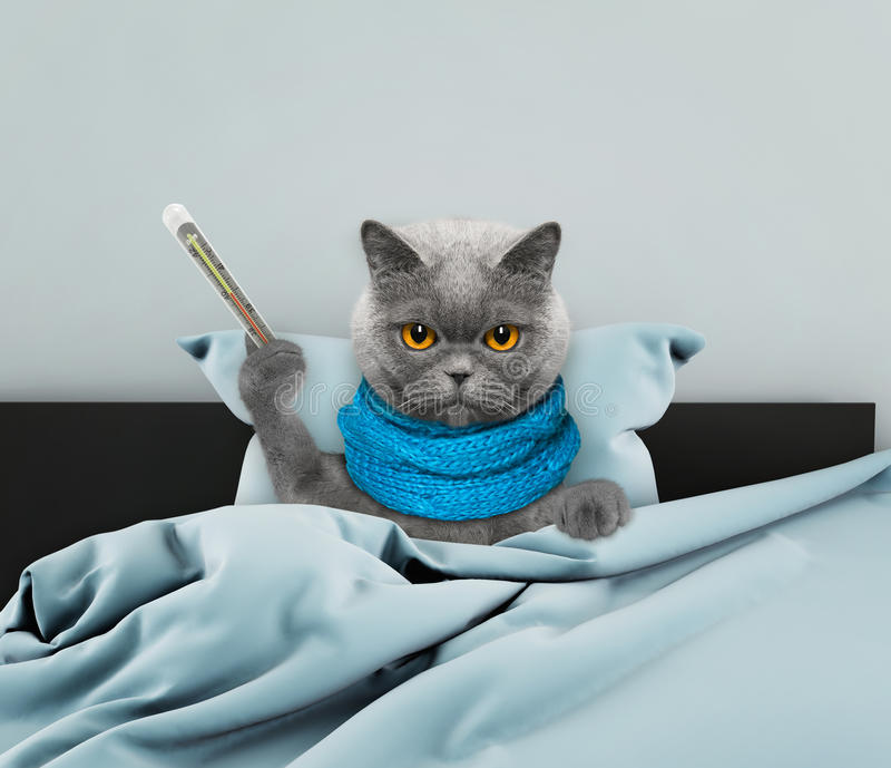Vraiment beaucoup de chat malade dans le lit photos libres de droits