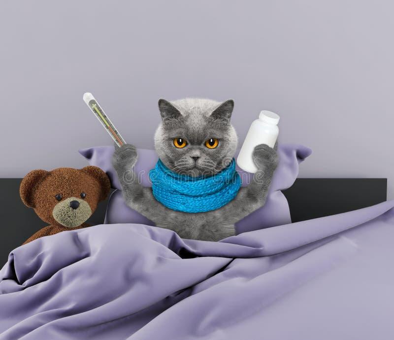 """Résultat de recherche d'images pour """"chat malade"""""""