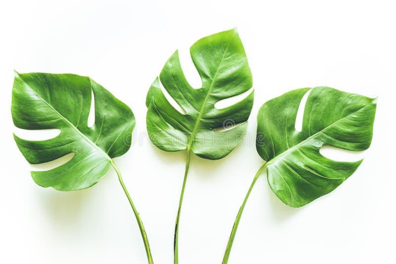 Vrais milieux tropicaux de feuilles sur le blanc Concept botanique de nature photos stock