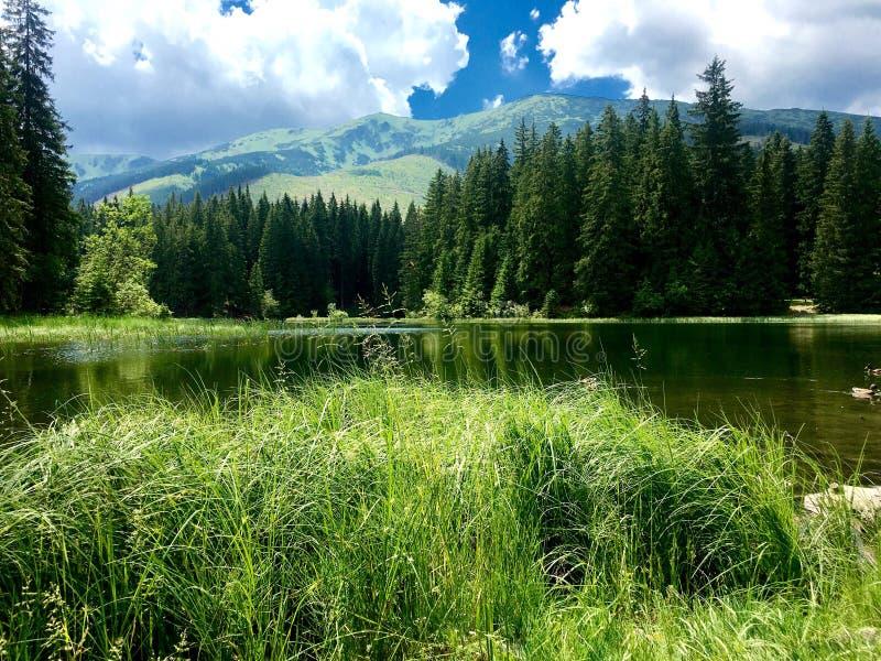 Vrbicke Pleso, Demanovska Dolina, Sistani zdjęcia stock
