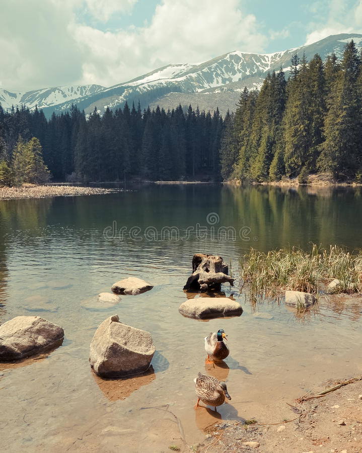 Vrbicke sjö i Tatra berg. Slovakien royaltyfri bild