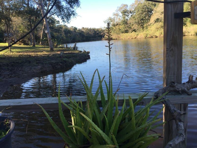 Vrede van menings riverbank scène royalty-vrije stock afbeeldingen