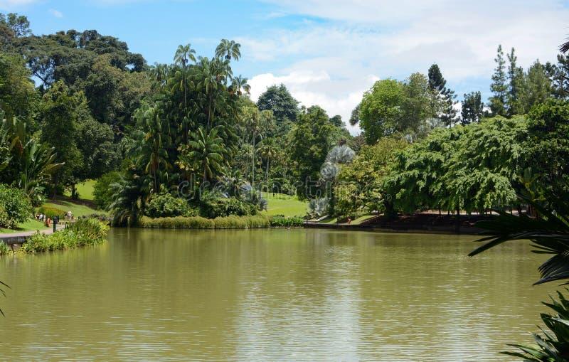 Vreedzaam landschap rond Symfoniemeer bij de Botanische Tuinen van Singapore stock afbeeldingen
