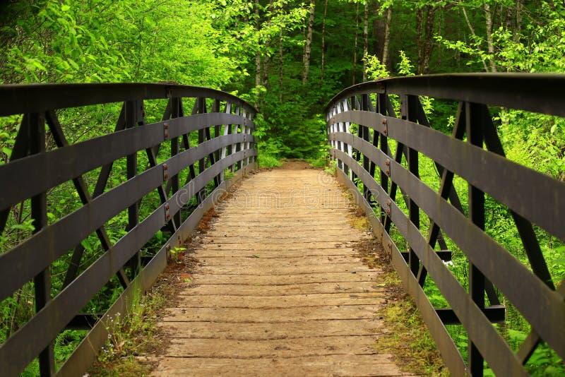 Vreedzaam Noordwesten Forest Trail royalty-vrije stock foto