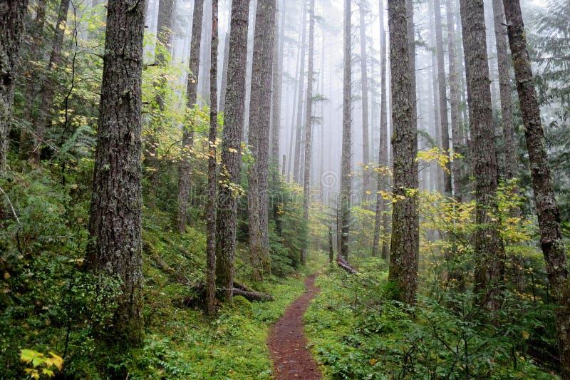 Vreedzaam Noordwesten Forest Trail royalty-vrije stock afbeelding
